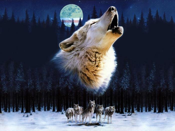 Wolfs (15) (700x525, 92Kb)