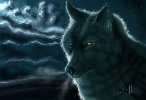 Wolfs (17) (622x428, 28Kb)