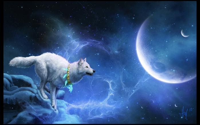 Wolfs (19) (700x437, 375Kb)