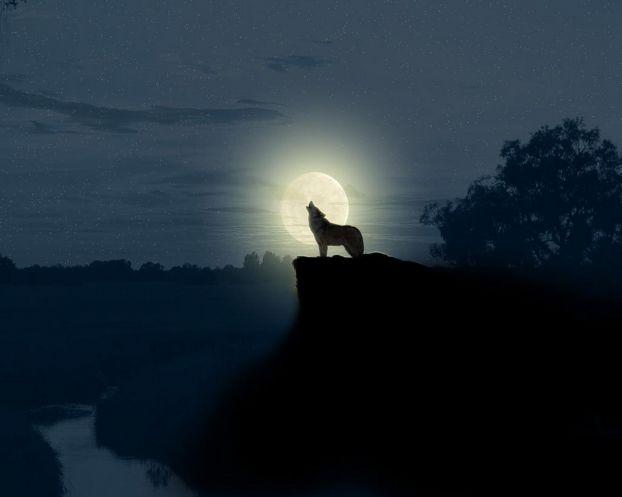 Wolfs (21) (622x497, 17Kb)