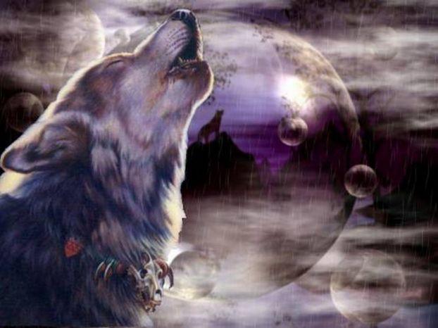Wolfs (24) (622x466, 40Kb)
