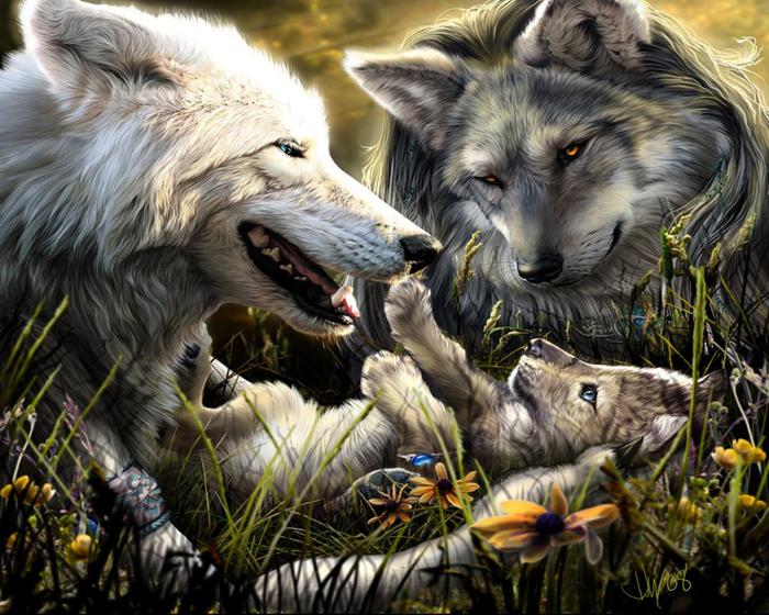 Wolfs (26) (700x560, 496Kb)