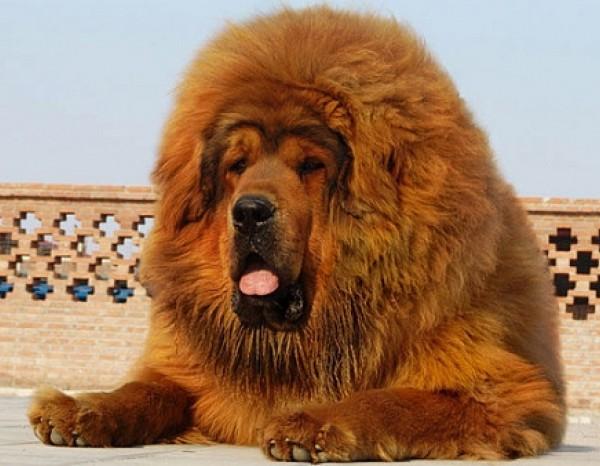 dog (600x466, 72Kb)