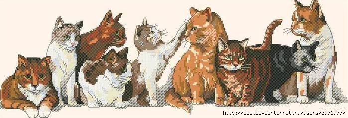 СХЕМА.  Кошки.  Вышивка крестом, схемы.
