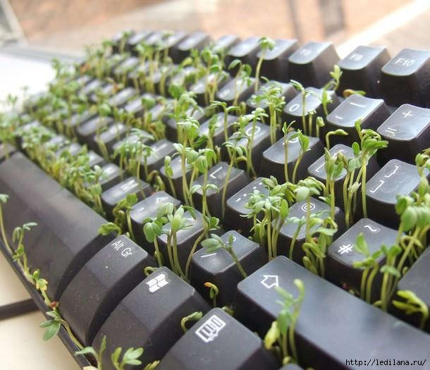 клавиатура2 (610x525, 168Kb)