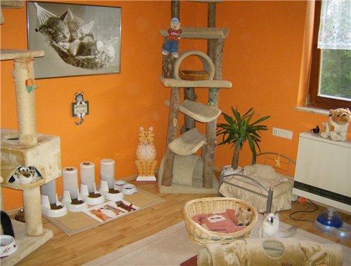 Комната для кошек интерьер