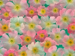 цветыjpeg (259x194, 8Kb)