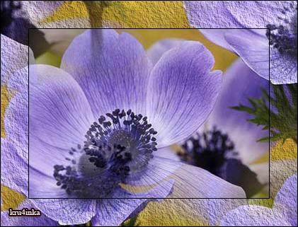 Сиреневый-цветочек (421x321, 257Kb)