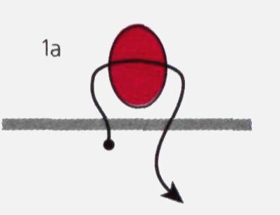 1 (398x306, 10Kb)