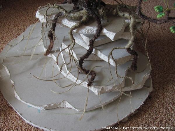 оформление корней дерева бонсай.