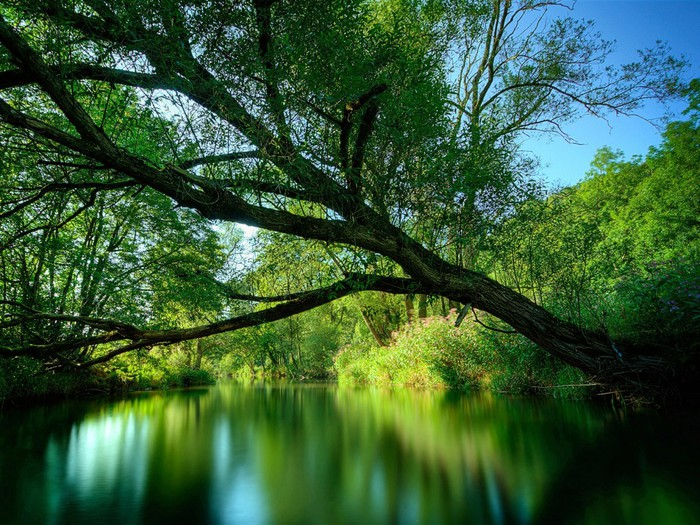 Nature_Forest_Green_Forest_River_017398_ (700x525, 165Kb)
