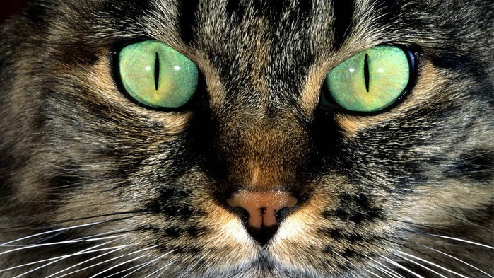 Глаза у кошек обладают особой притягательной силой.