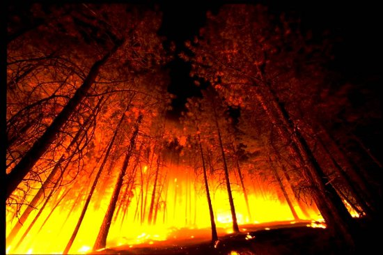 forest_fire_from_below (550x366, 49Kb)