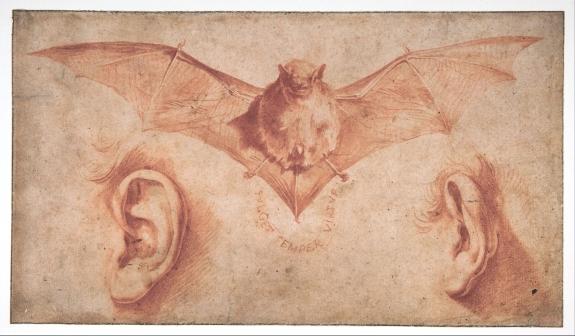 bat-3-ribera (575x336, 174Kb)