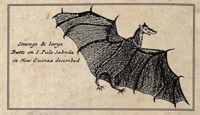 William-Dampier-New-Guinea-Bat 1699 (700x401, 60Kb)