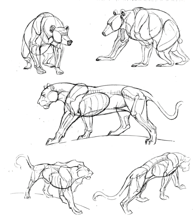 Искусство рисовать животных.