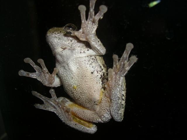 froggie (3) (640x480, 208Kb)