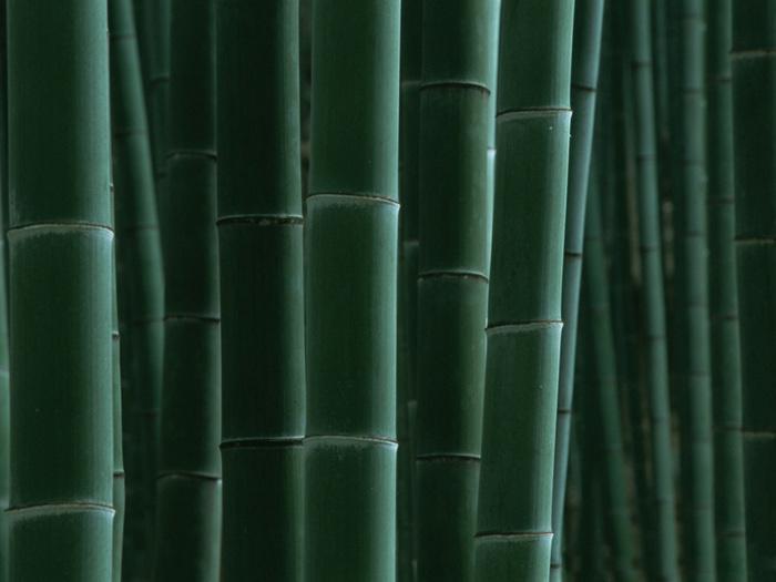 bamboos125 (700x525, 98Kb)
