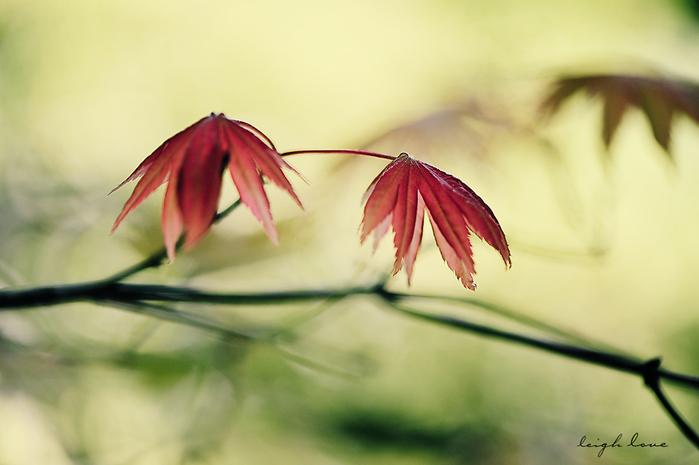 3749748_leaves (700x465, 178Kb)