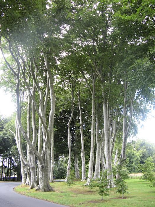 Powerscourt Gardens -Сад Пауэрскоурт . 81864