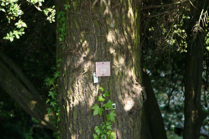 Powerscourt Gardens -Сад Пауэрскоурт . 32549