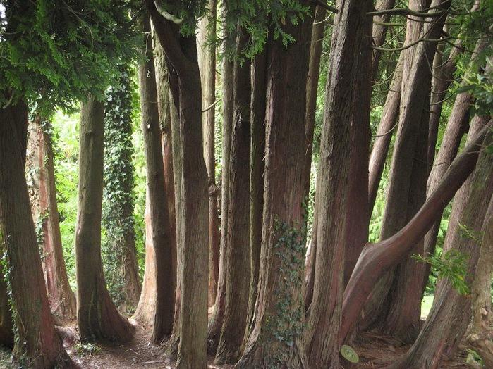 Powerscourt Gardens -Сад Пауэрскоурт . 62943