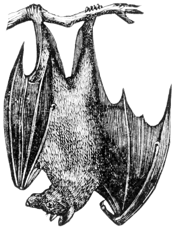 fruitbat (351x493, 47Kb)