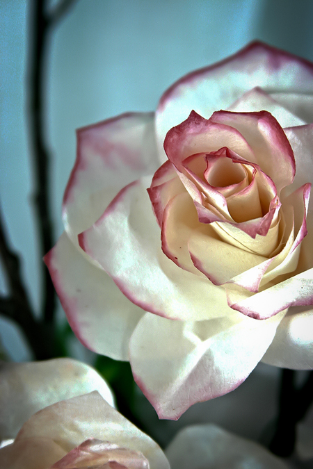 paper_roses2 (450x675, 276Kb)