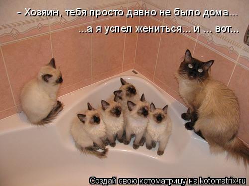 humor_2670_20091028_1366236739 (500x375, 31Kb)