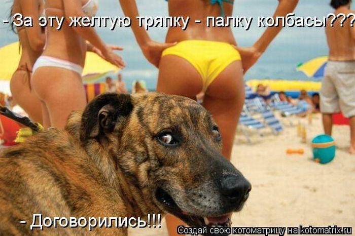 kotomatrix_26 (700x466, 65Kb)