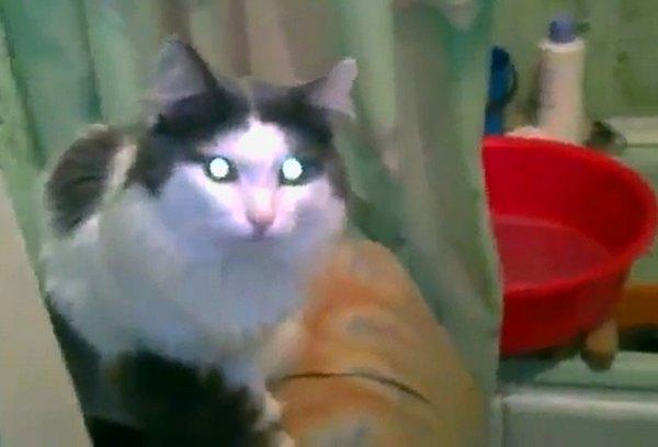занято кошки приколы позитив видео/3518263_anyato (600x408, 25Kb)