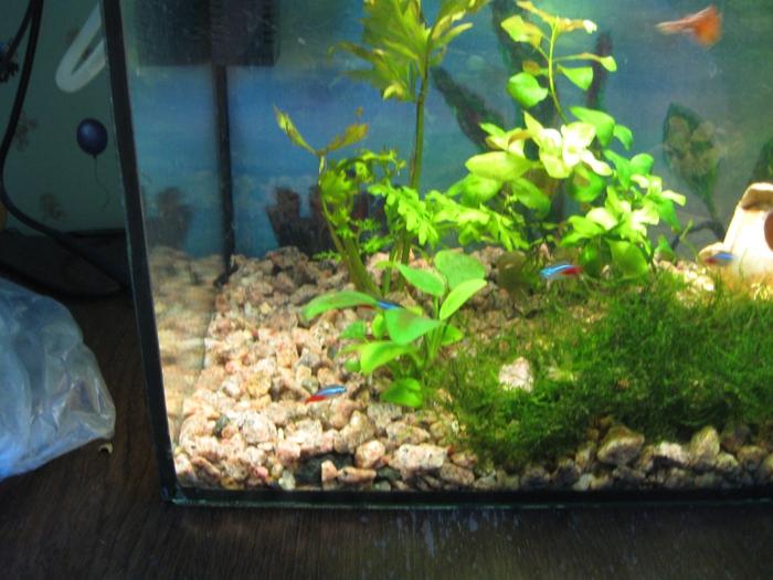 Аквариум 30 литров. Рыбки/3881963_akva7 (700x525, 290Kb)