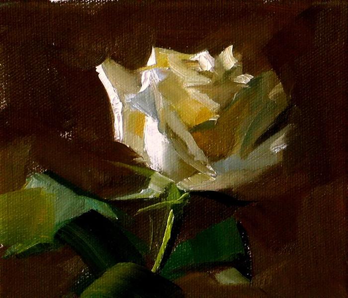 White rose study (700x598, 517Kb)