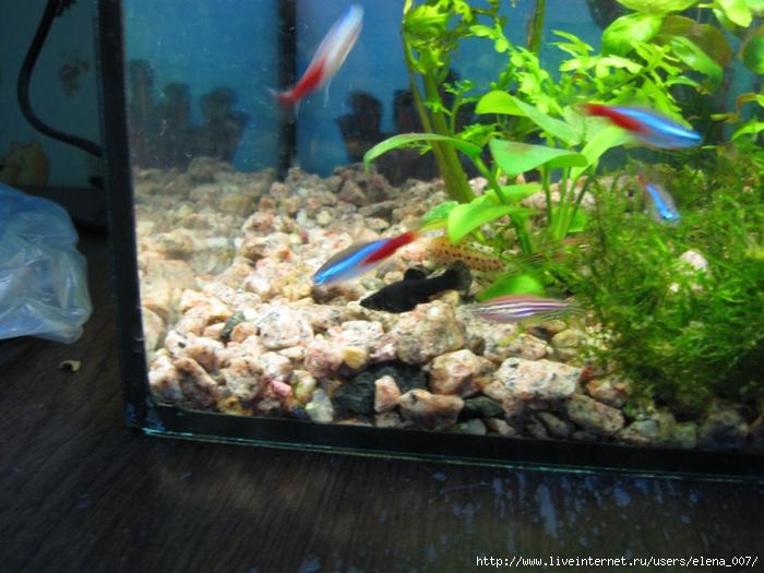 Аквариум 30 литров. Рыбки//3881963_akva9 (700x525, 313Kb)