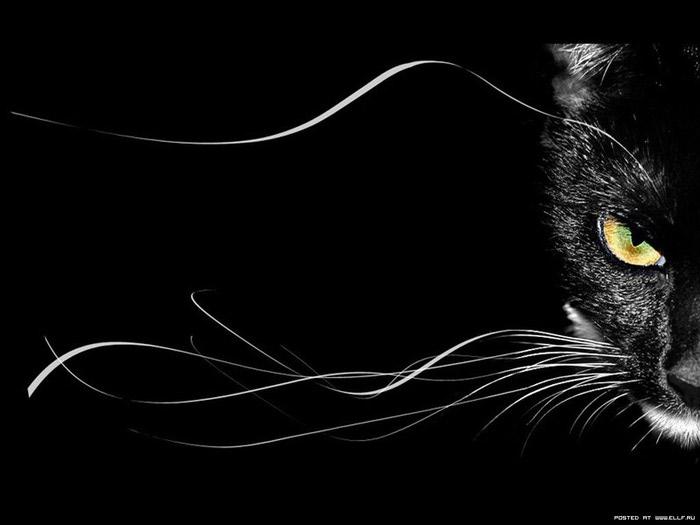 картинки красивые чёрные кошки