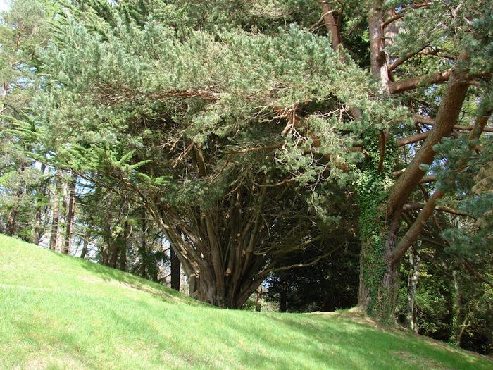 Powerscourt Gardens -Сад Пауэрскоурт . 90148