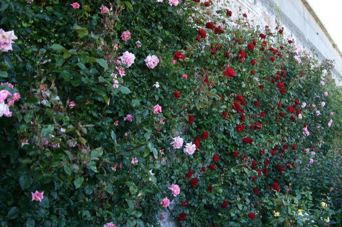 Powerscourt Gardens -Сад Пауэрскоурт . 64248