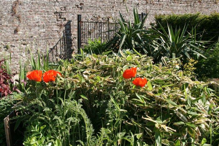 Powerscourt Gardens -Сад Пауэрскоурт . 86656