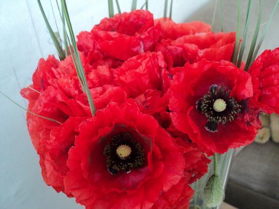 маки лето цветы поле/3518263_DSC09422 (548x411, 53Kb)