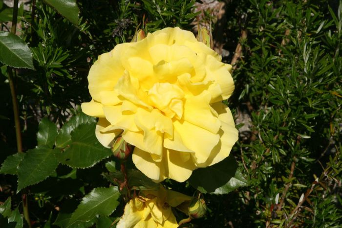 Powerscourt Gardens -Сад Пауэрскоурт . 51545