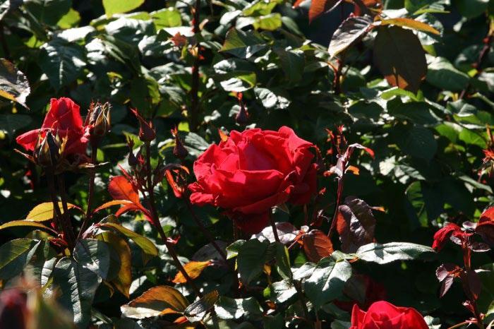 Powerscourt Gardens -Сад Пауэрскоурт . 83070