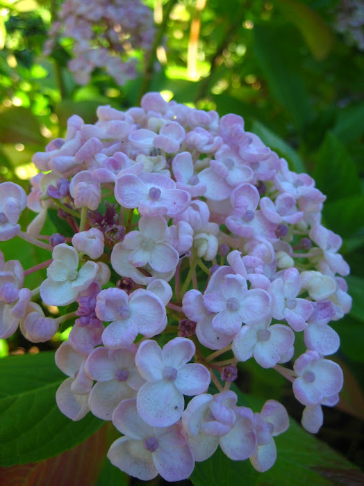 Powerscourt Gardens -Сад Пауэрскоурт . 84116