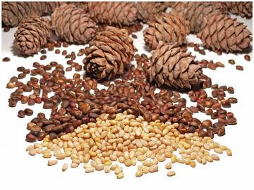 кедровые орехи (360x270, 63Kb)