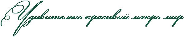 4360286_RudivitelxnoPkrasivqIPmakroPmir (597x121, 12Kb)