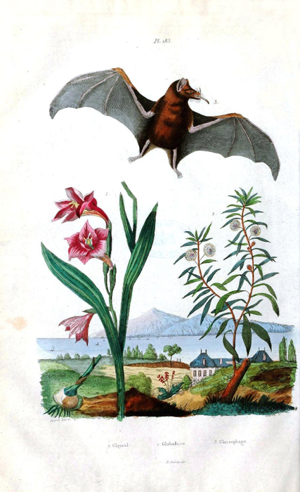 Animal - Bat - Bat with flowers and landscape-1835 (427x700, 301Kb)