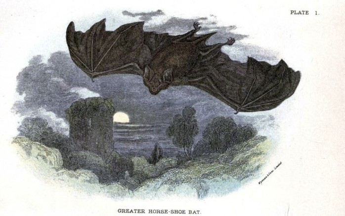 Animal-British-mammal-1896-Bat-and-full-moon-780x488 (700x437, 87Kb)