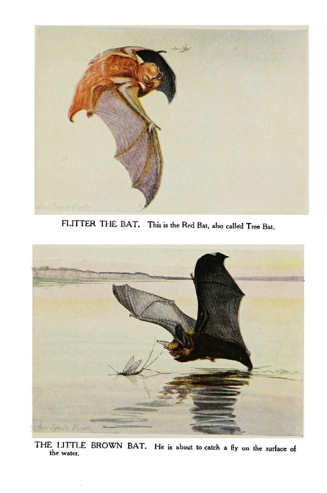 Animal - Bat - Flitter, Brown-1920 (464x700, 250Kb)