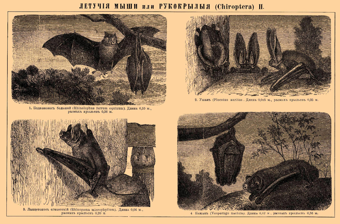 Brockhaus_and_Efron_Encyclopedic_Dictionary_b34_610-2 (700x460, 472Kb)