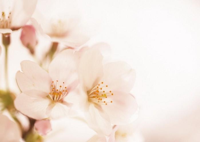 Ванильные фотографии цветов от Sozaijiten 3 (700x496, 31Kb)