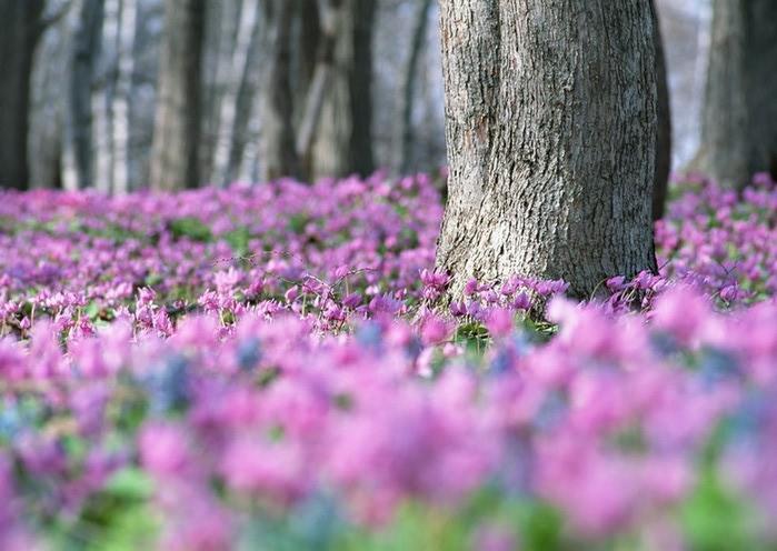 Ванильные фотографии цветов от Sozaijiten 24 (700x496, 93Kb)